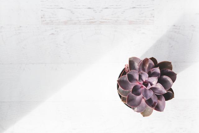 Lush_Botanica_Spa-153.jpeg