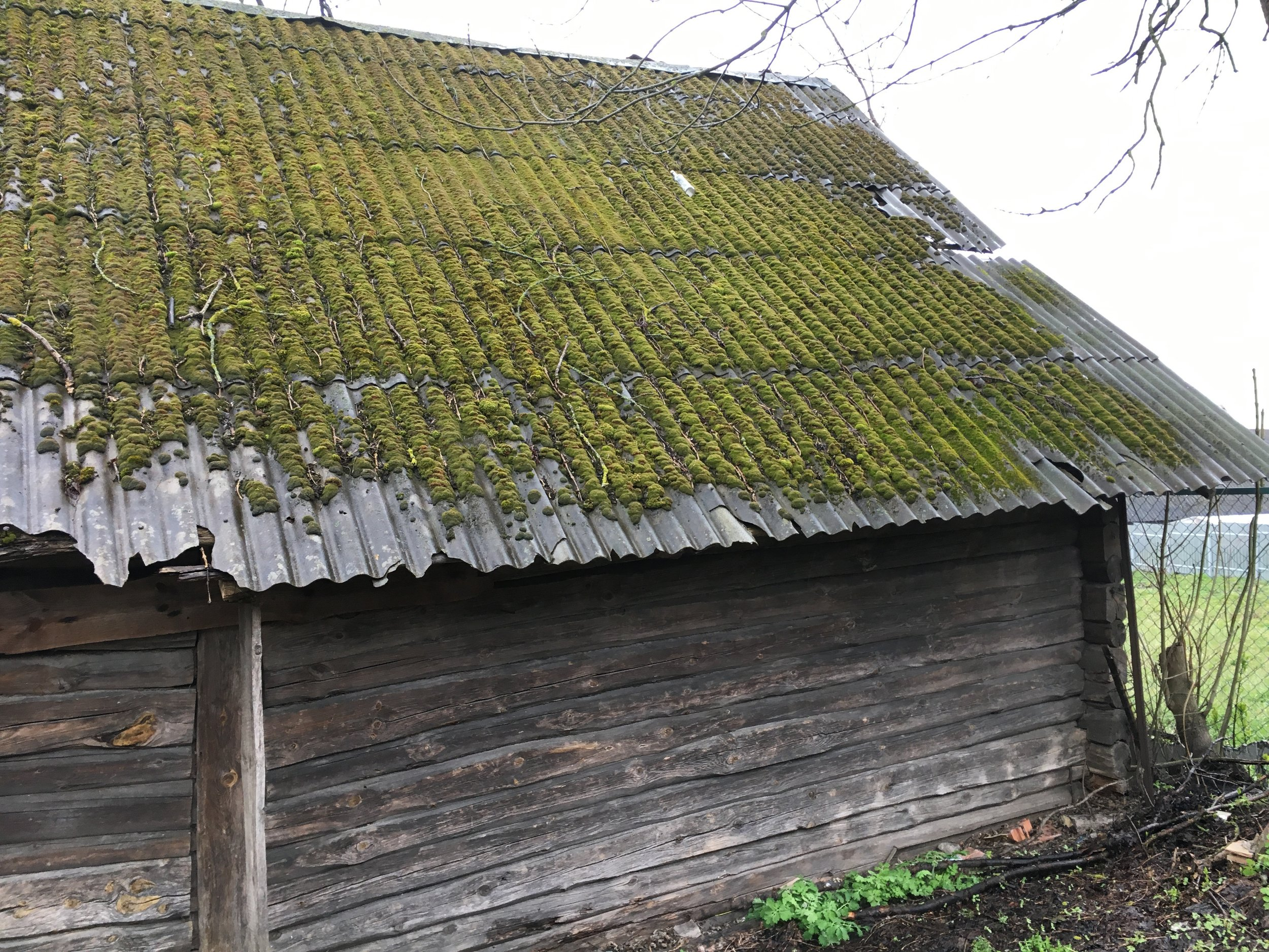 Belarus is very wet and moss grows everywhere.