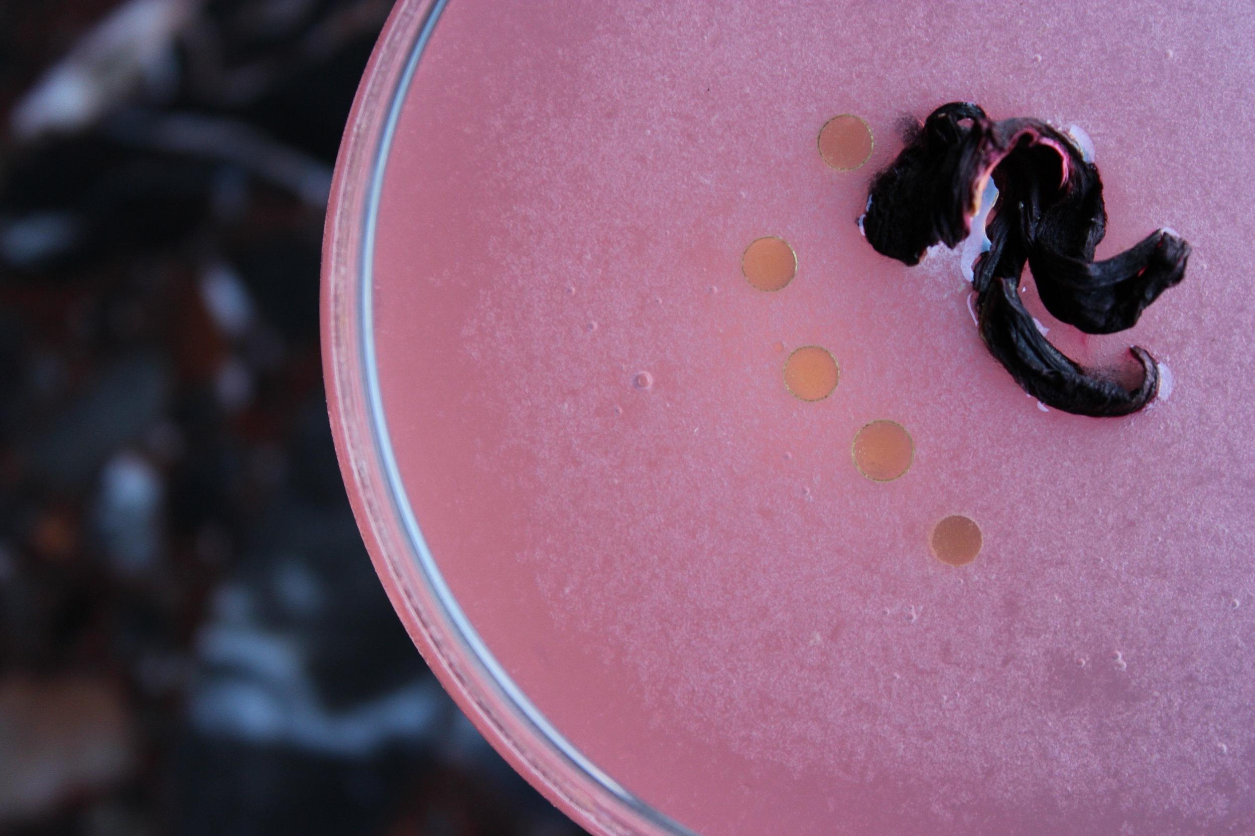 Hibiscus Gimlet 2.JPG