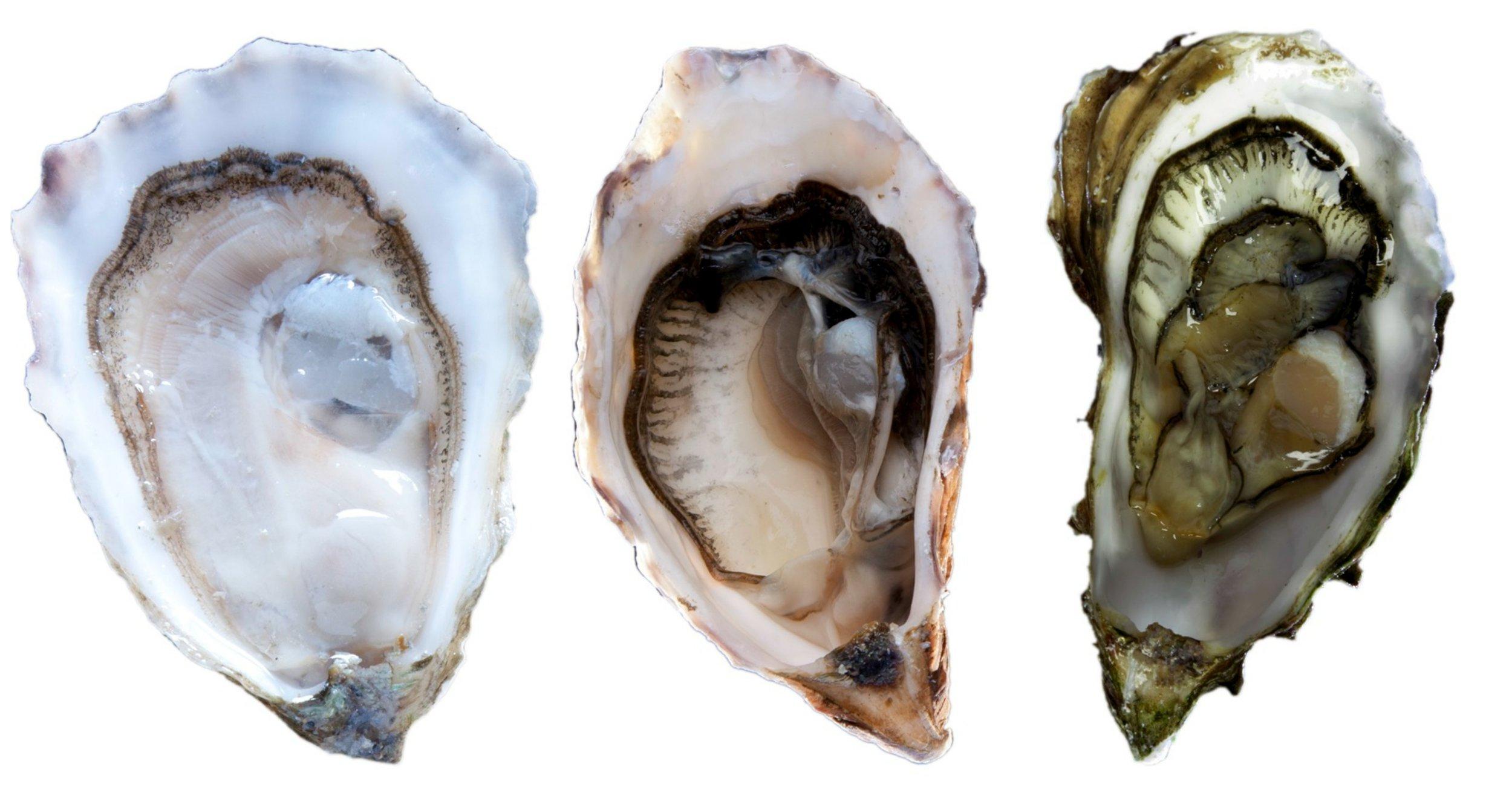 OysterTrio.jpg