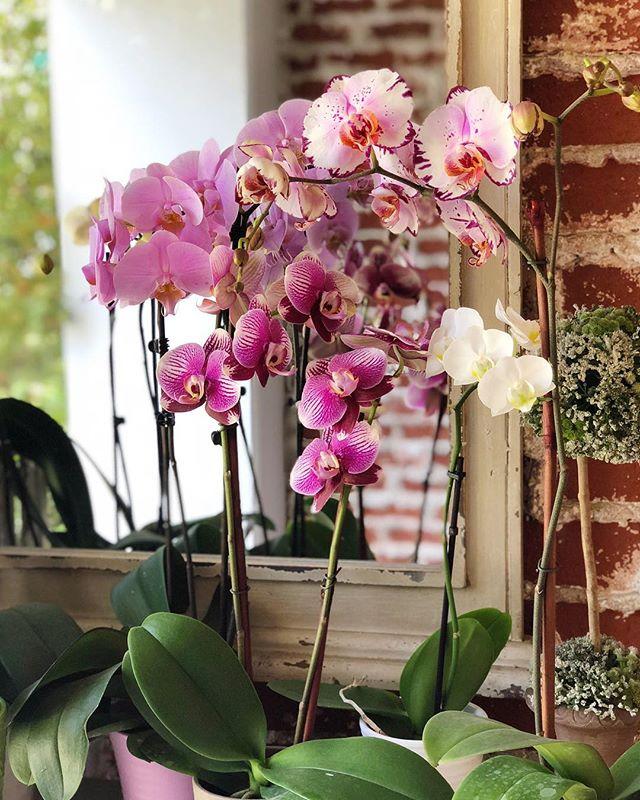 Front door ambience ✔️ #frontdoorflorals #forprettysake #imsomartha