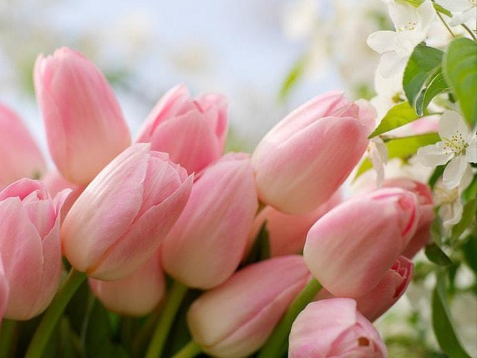 Image - gardenia.net