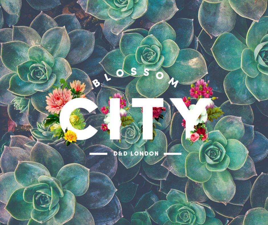 Blossom City Sophie Tea