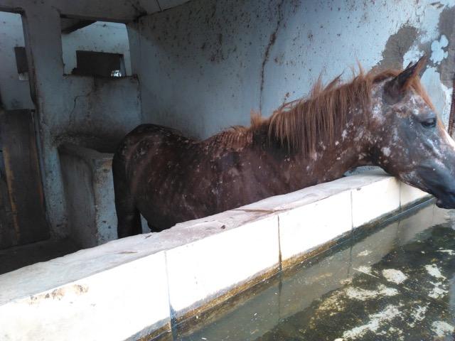djibouti abandoned National Guard Parade horses  20 June 2016.jpeg