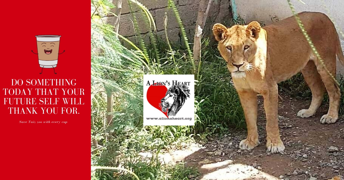 """Click the picture and go directly to our """"Cup of Coffee"""" campaign for the Taiz animals."""