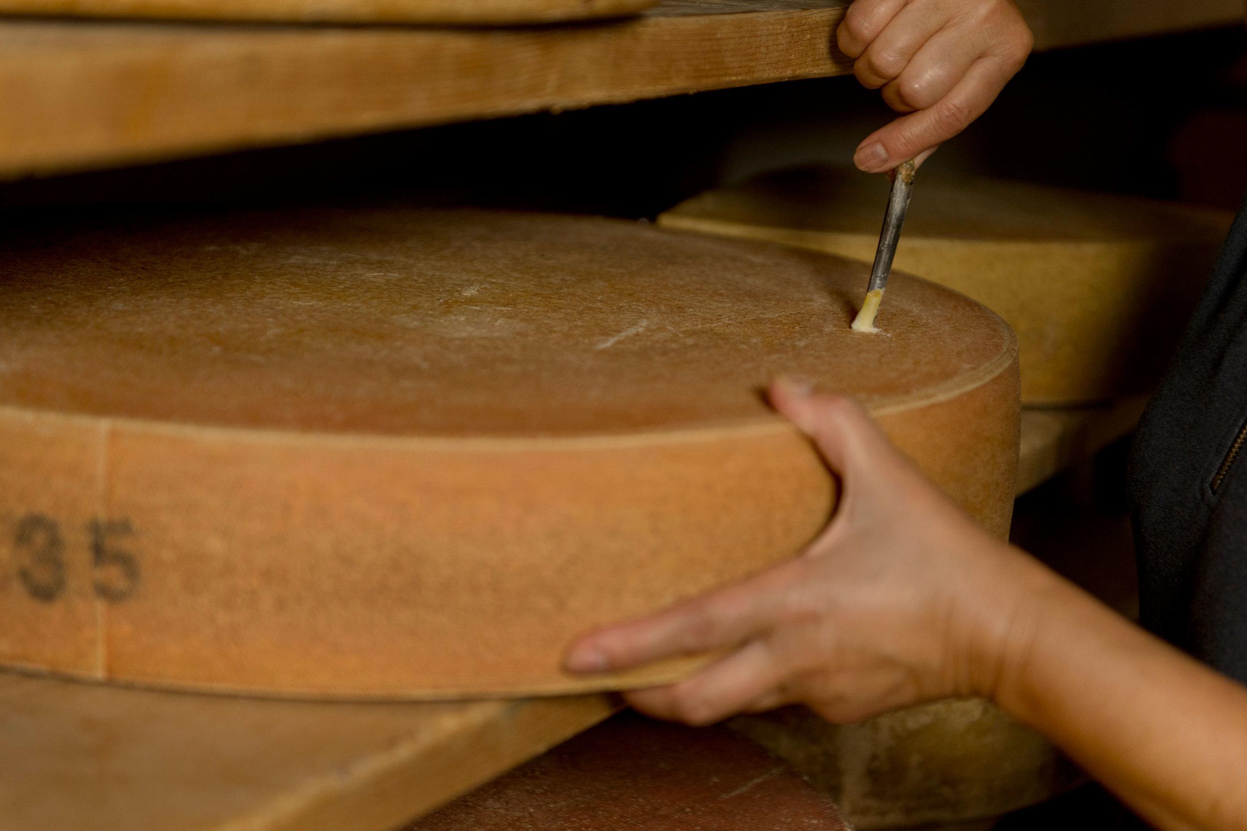 Ein ca. 30kg schwerer Käselaib wird für eine Kostprobe angebohrt.