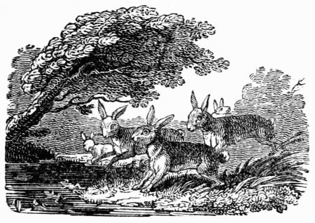 hares-and-frogs.jpg