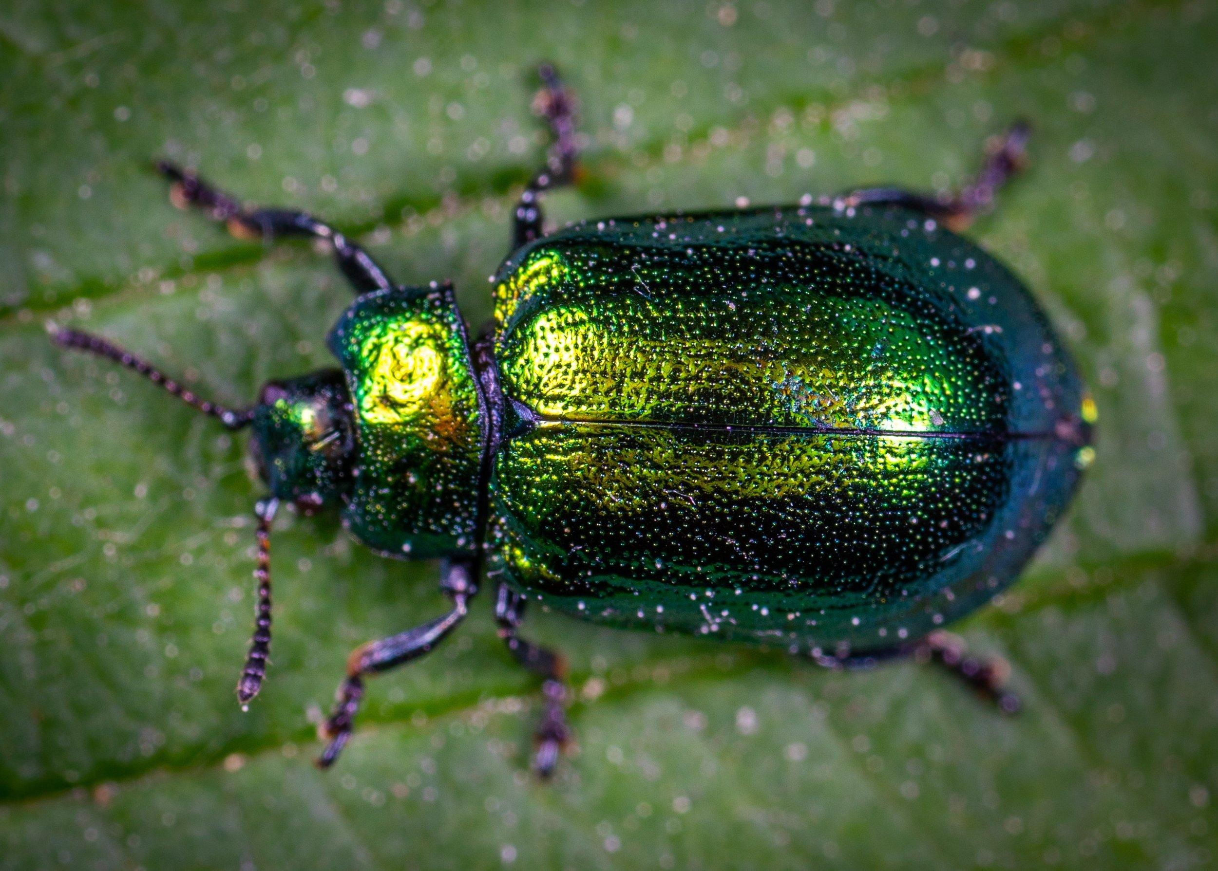 animal-beetle-biology-1114318.jpg