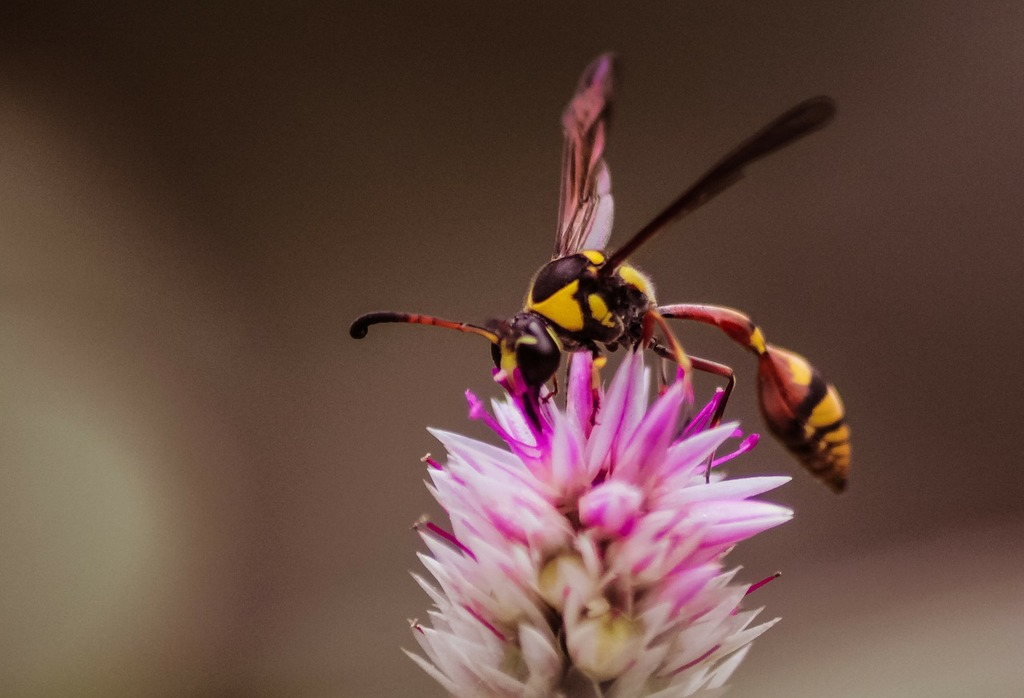 Wasps insects flowers..jpg