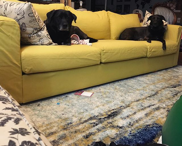 The dogs seem to approve of the new couch. #dogsofinstagram