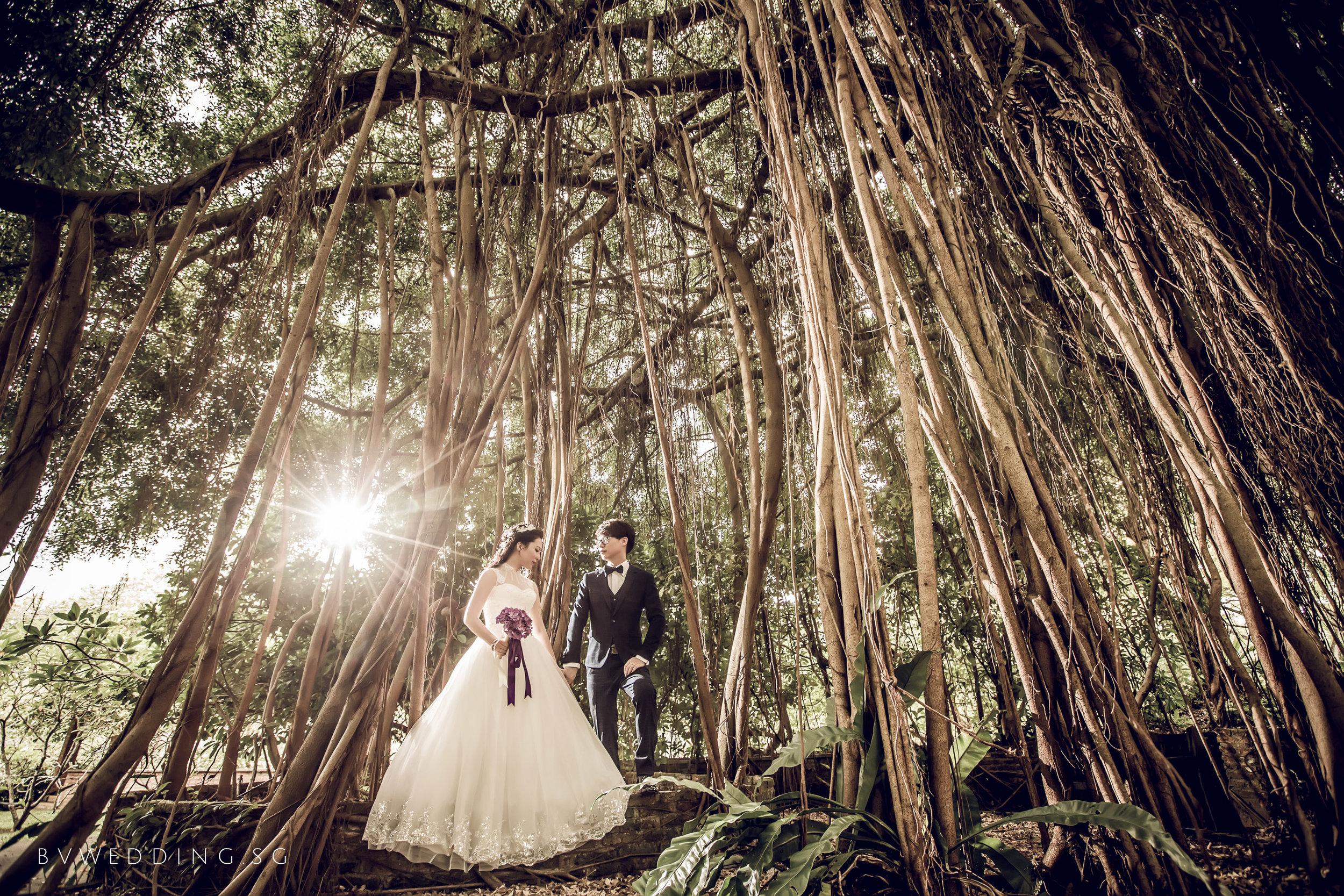 singapore-pre-wedding-photography-botanic-garden.jpg