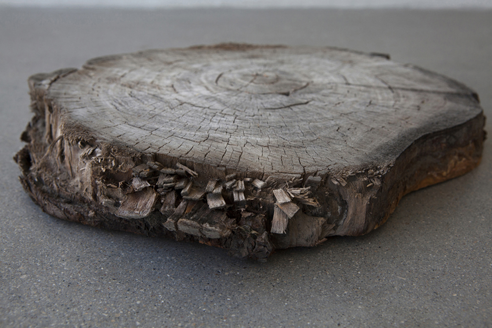 Divya Mehra.  A civic death (in praise of the threat), thus coherence – of patriarchy, of ancestry, of narrative – is made by erasure and exclusion) OR nothing last forever, I hope   you will consider the sensitivities of Hindus   2016, tree slab, 13 x 2.5 inches   Image credit: Karen Ashe