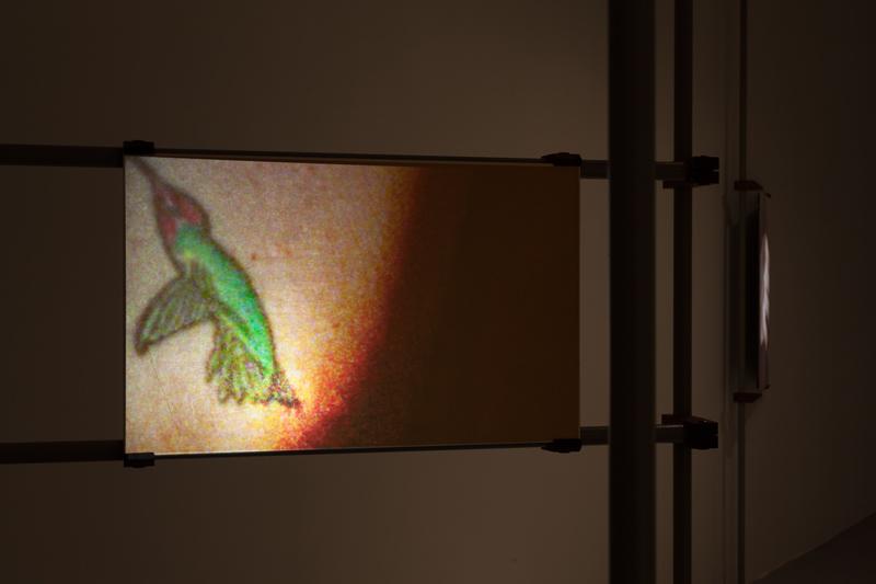 A Bestiary (hummingbird)  (installation), 2013, 16mm film transferred to digital