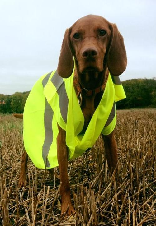 Princess Jasper helping out as a K9 marshal