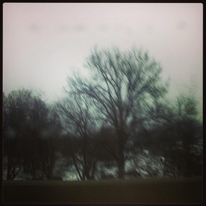 Trees-ET Photo-Moody Beauty-sm.jpg