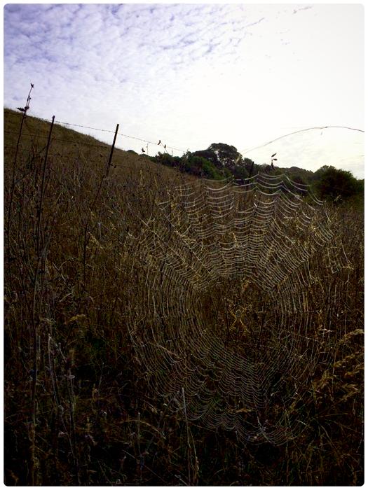 spider web-field-clouds_adj01-sm-03.jpg