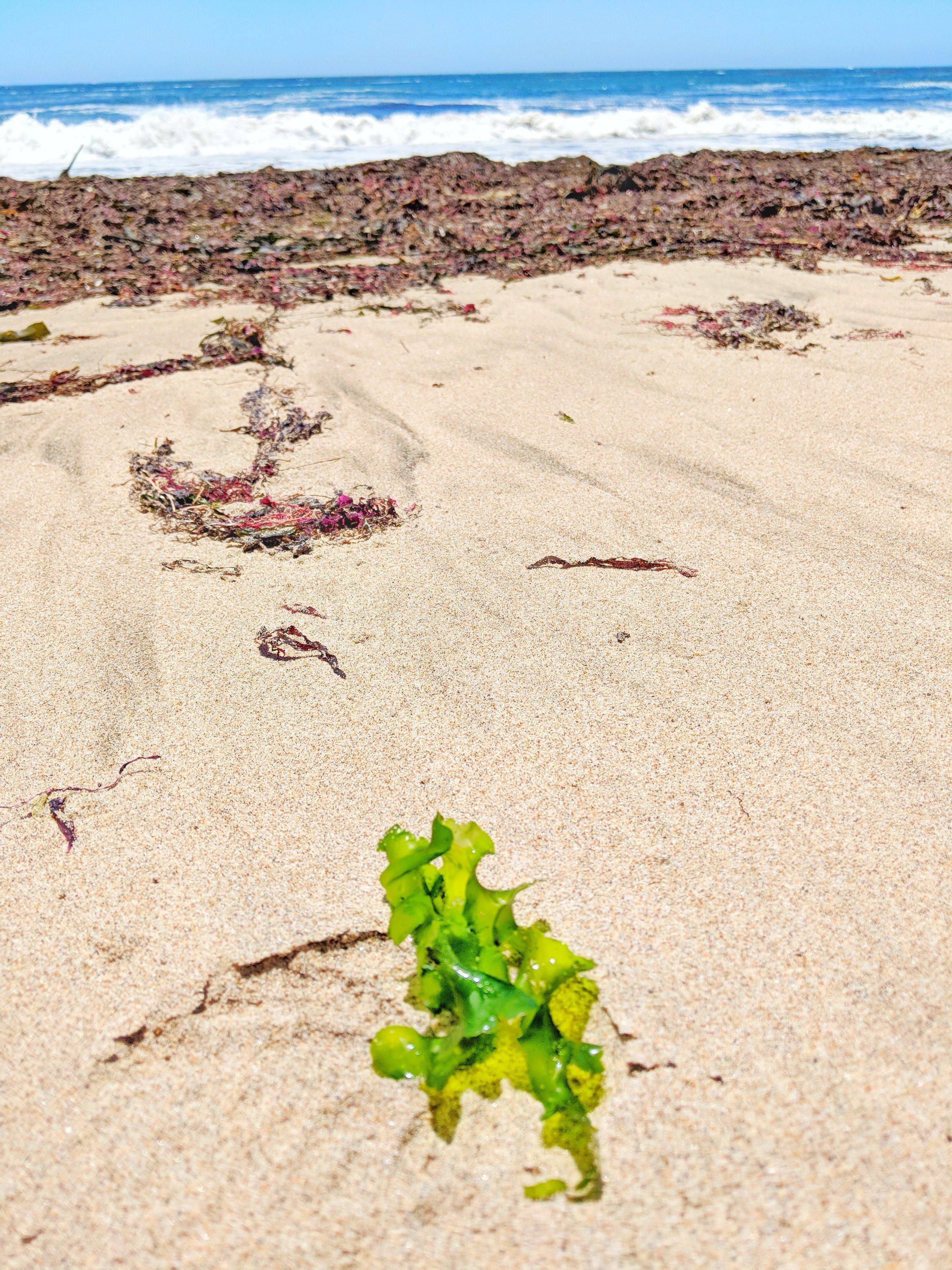 Wilder Ranch State Beach.