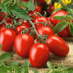 roma_tomatoes.jpg
