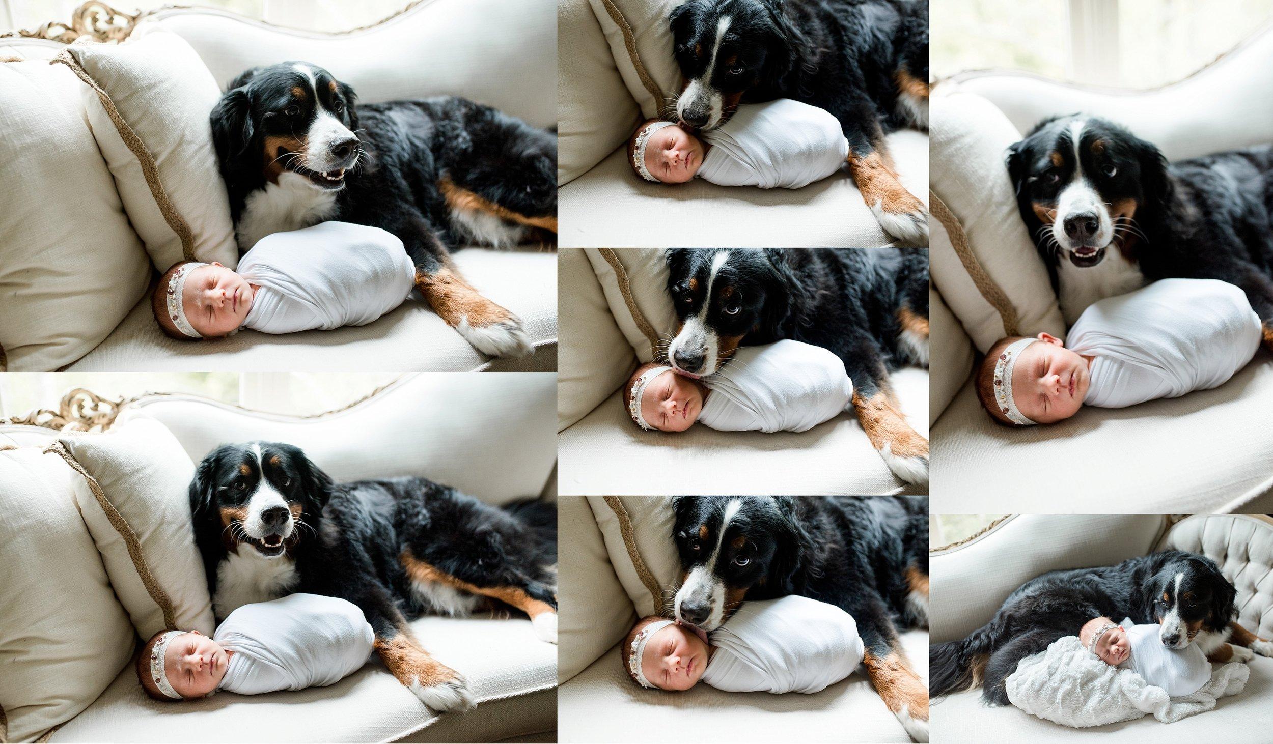 Dog and newborn photos