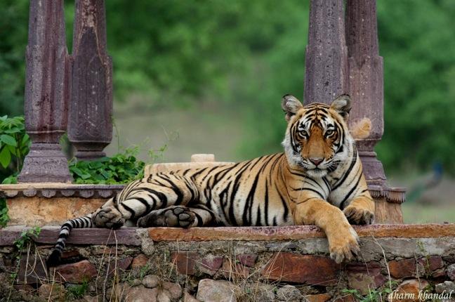 Image via  Dharmendra Khandal