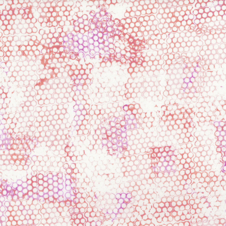3363-003 BEE POLLEN-CHILI TEPIN