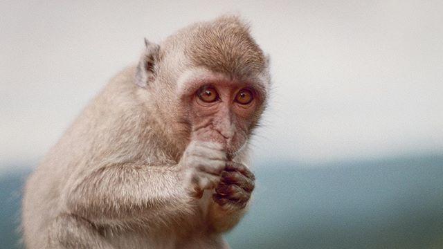 Mauritian Monkeys  #mauritius #35mm #pentax #fujifilm