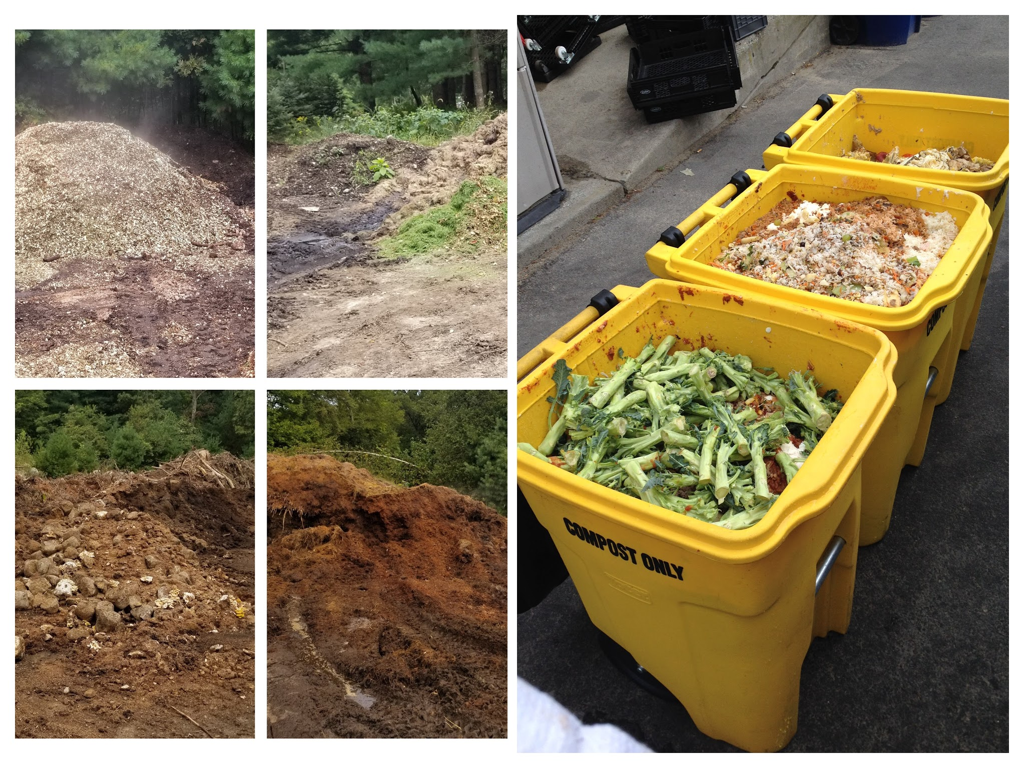 Different feedstocks for our compost recipe- wood chips, grass clippings, manure, mushroom compost and food scraps.