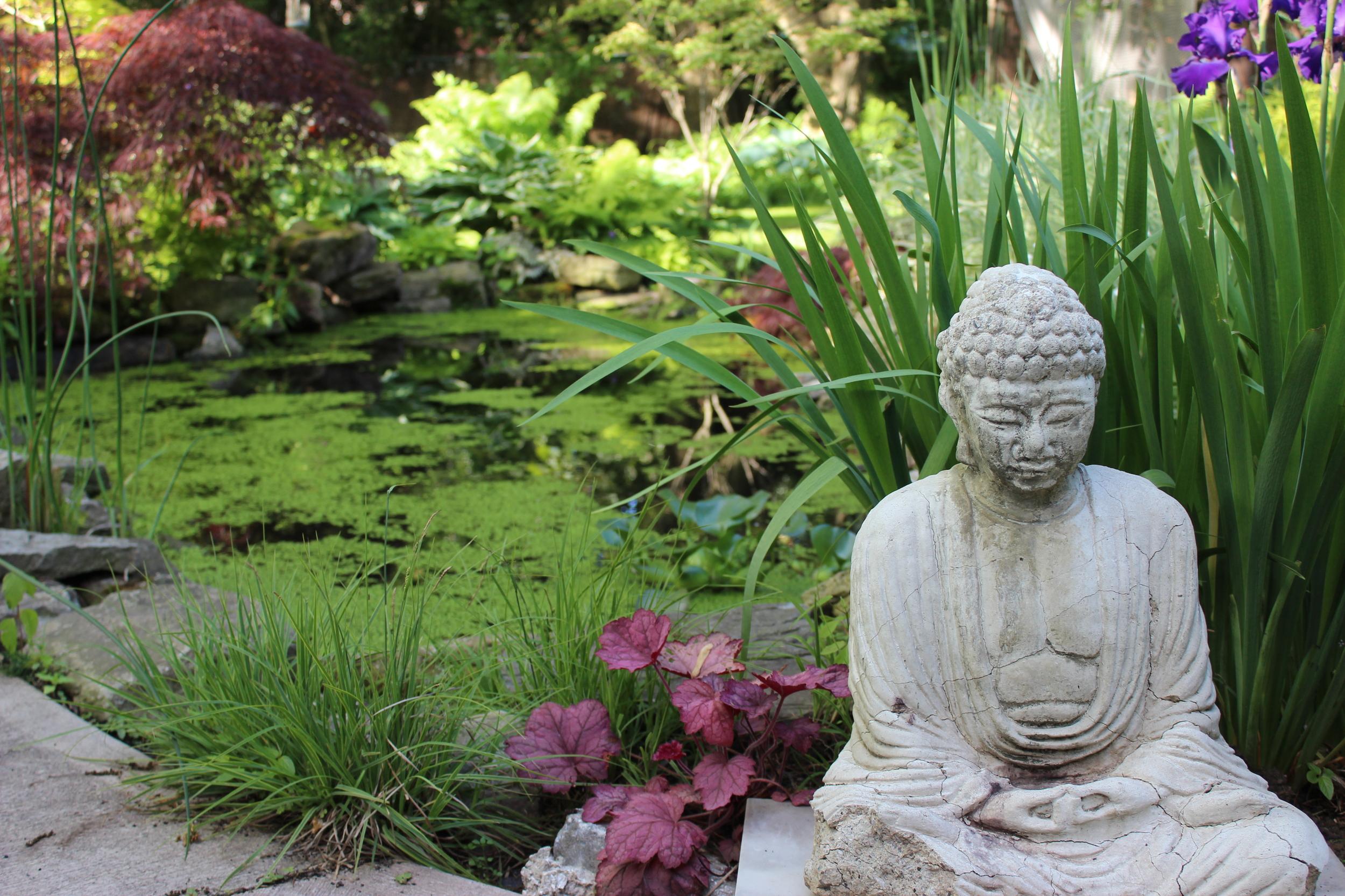 Garden with pond.JPG
