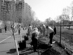 Wells Fargo Home Mortgage turned out 50 volunteers for the Arbor Day tree planting.