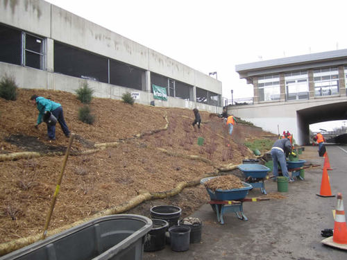 Volunteers finishing up mulching.