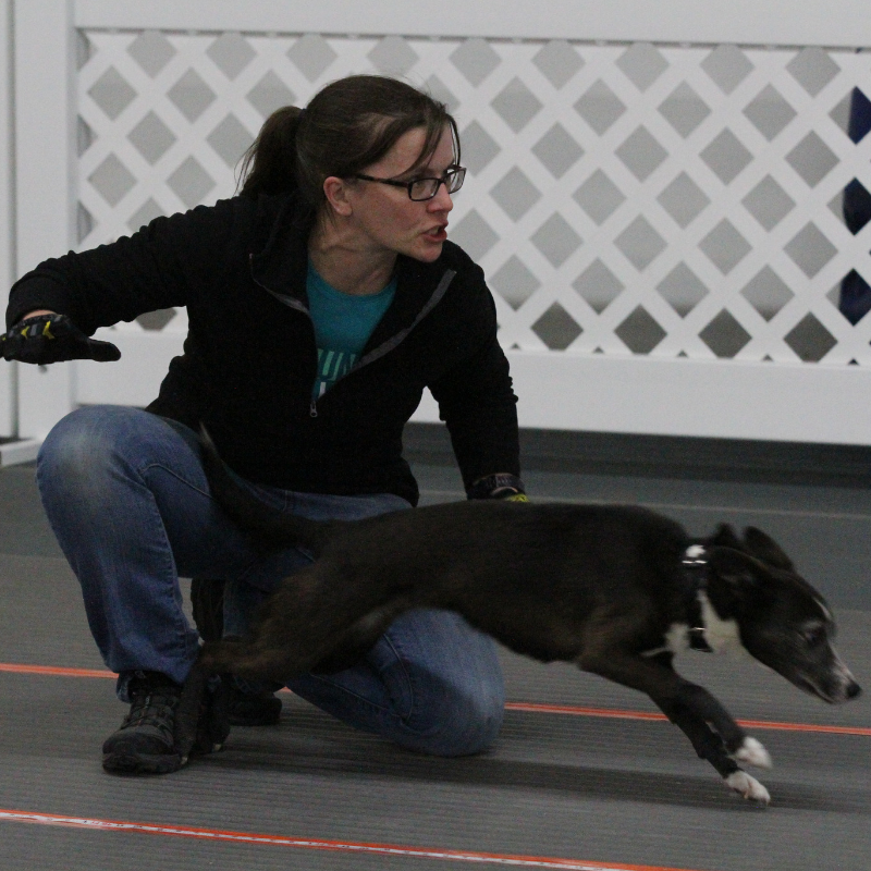 Danielle and Avro doing what they love best: Flyball!
