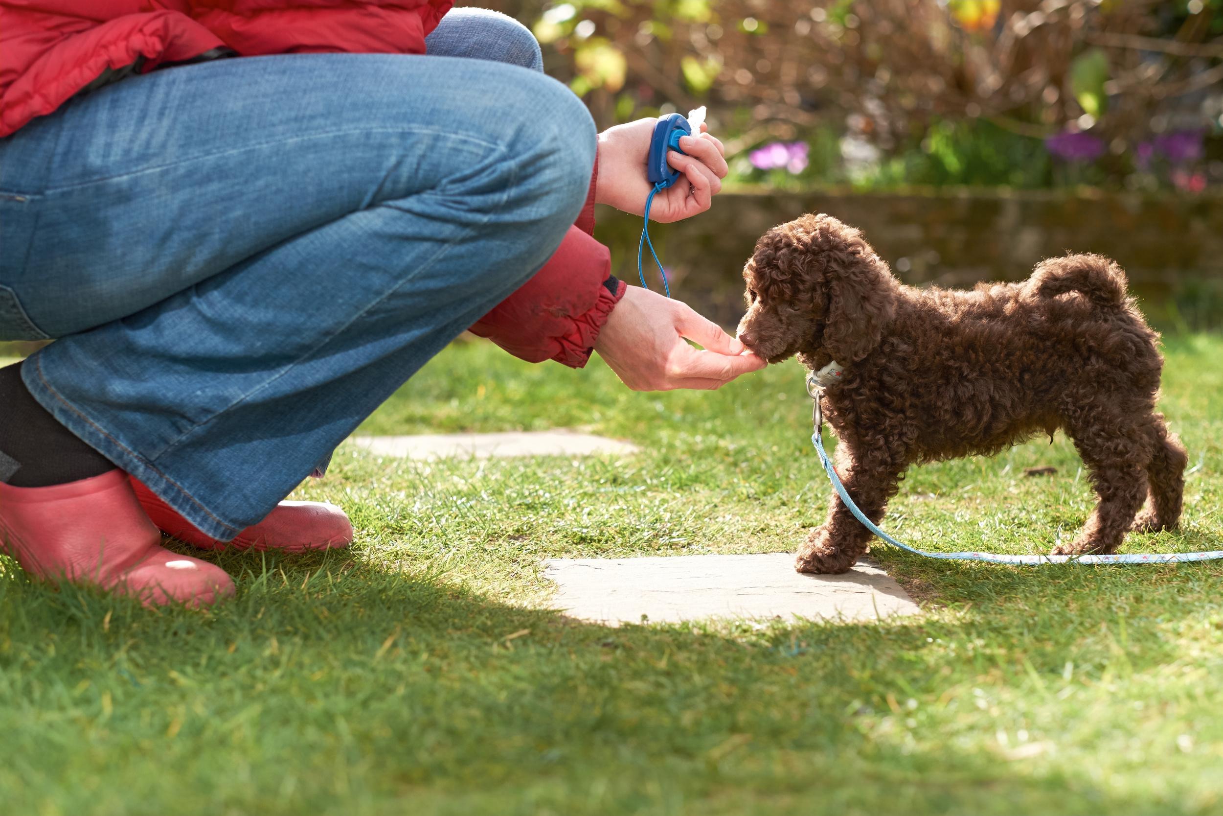 Puppy training classes dorking