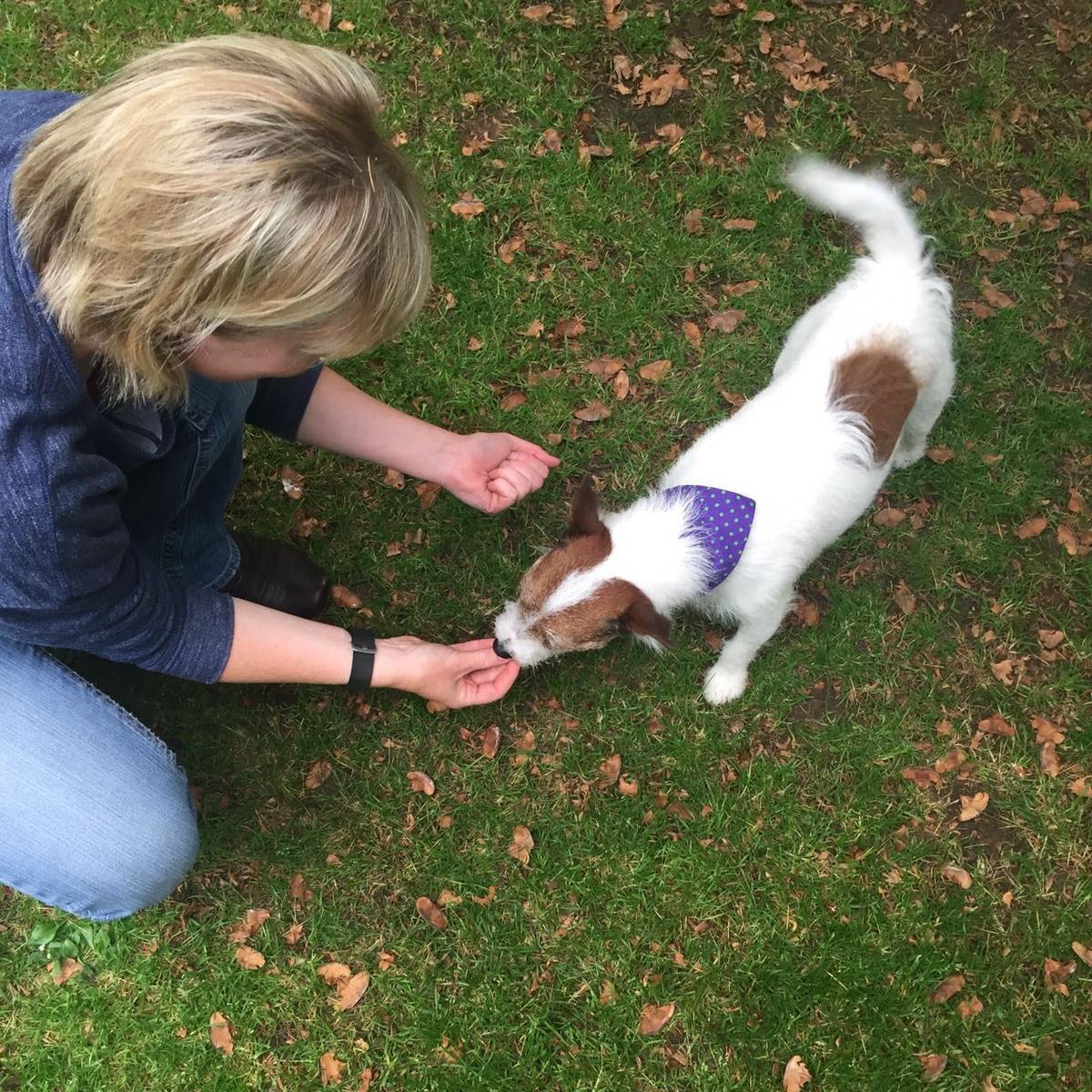 Puppy training classes brockham