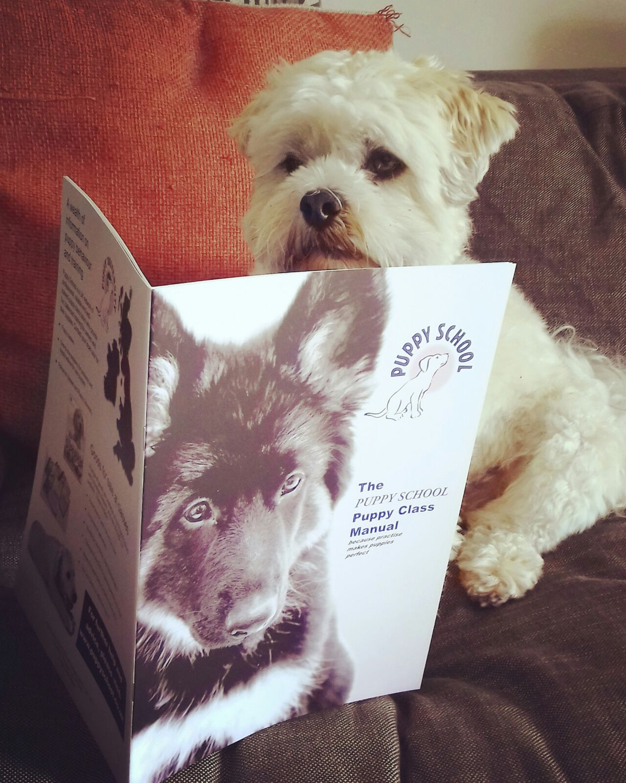 Puppy training Dorking certificate