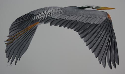 flying-heron-IMG_5264.jpg