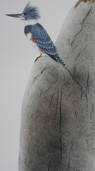 kingfisher-on-rock-IMG_4819.jpg