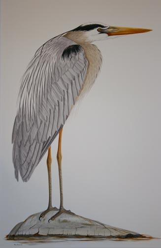 standing-heron-IMG_8830.jpg