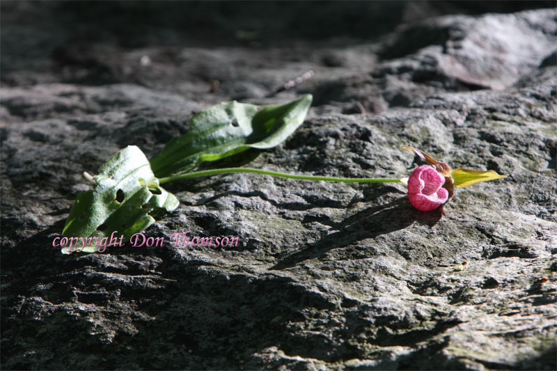 flower-on-rock.jpg