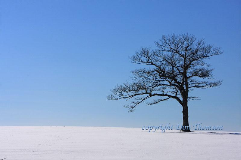 lone-winter-tree.jpg