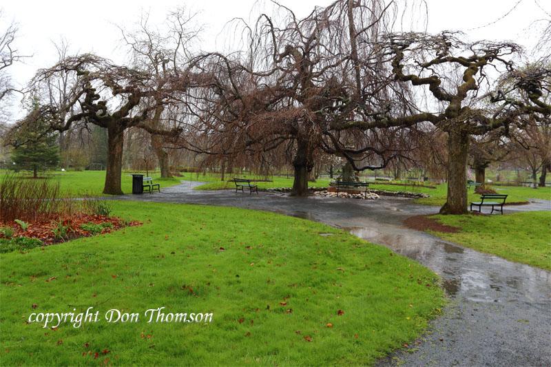 public-garden-rain.jpg