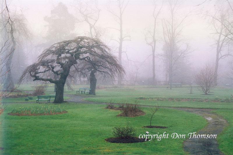 Public-Gardens-mist.jpg