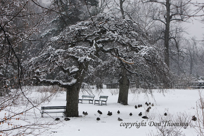 winter-public-gardens.jpg