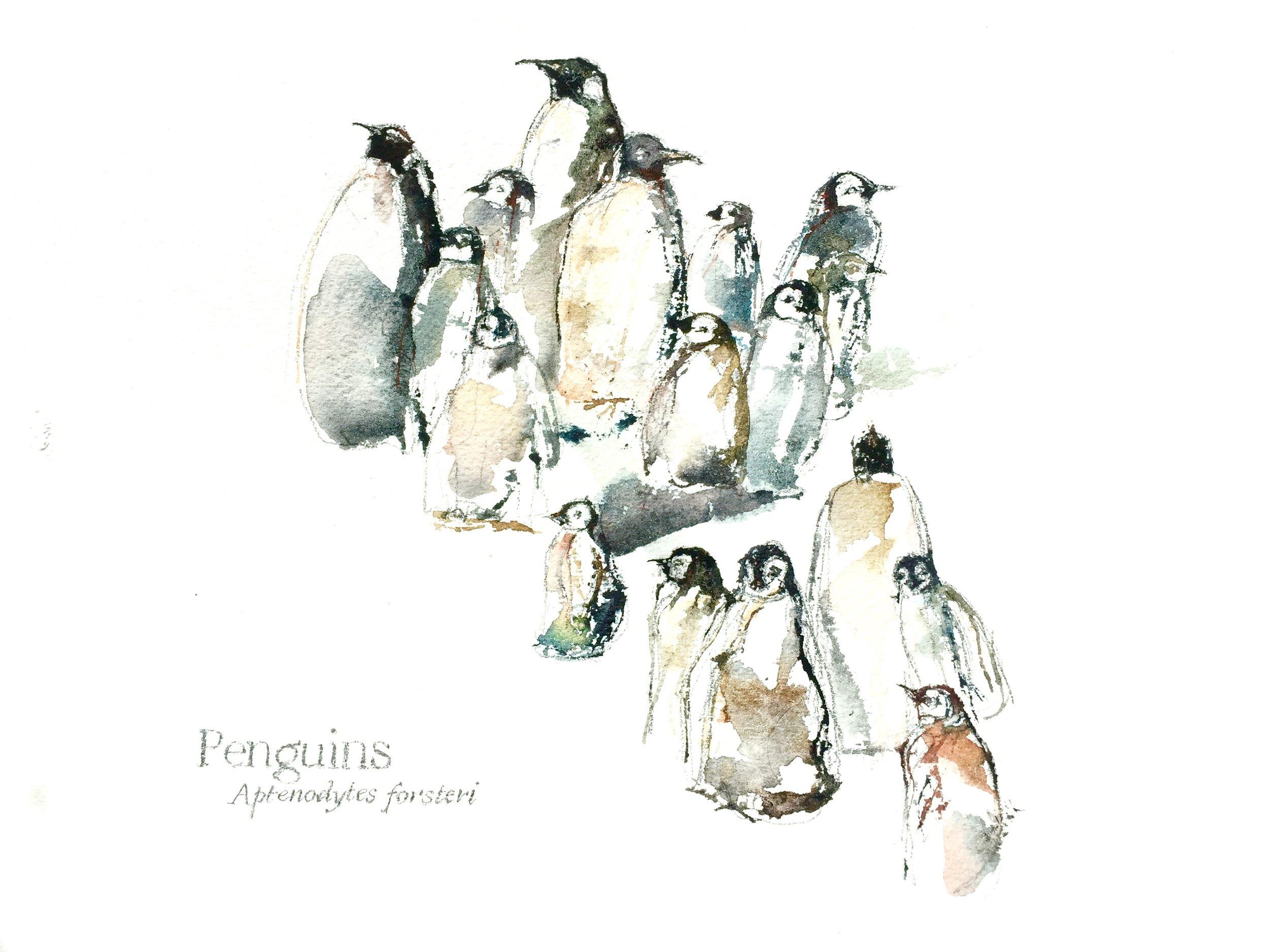 Penguins, 2016