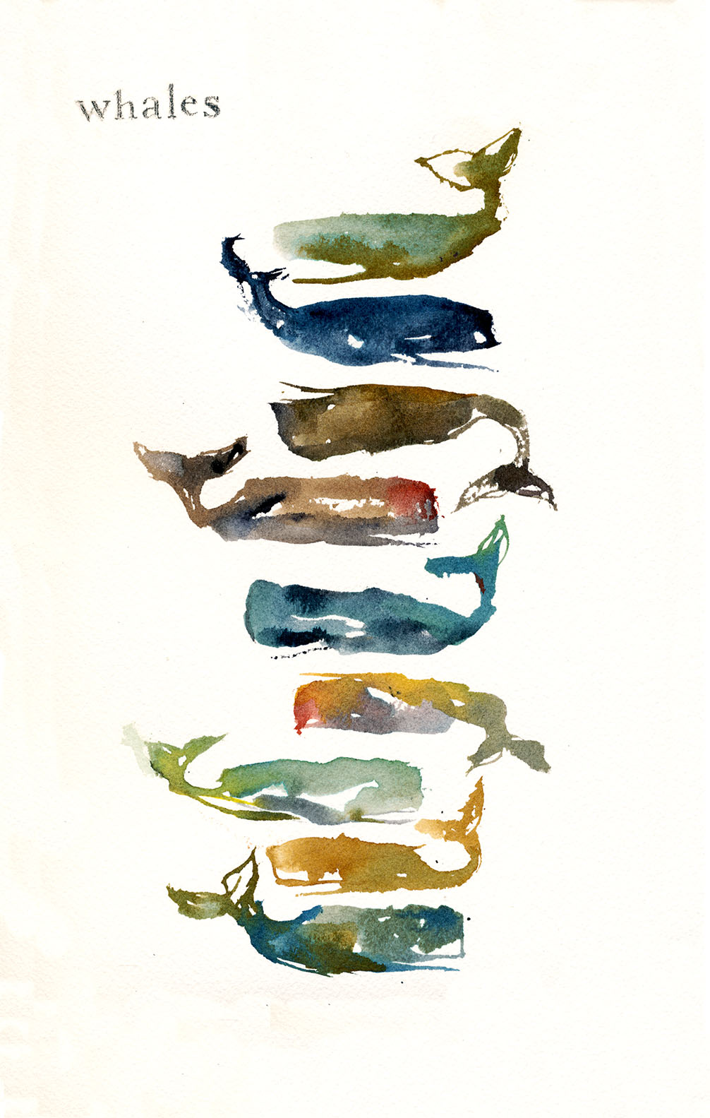 Whales, 2016