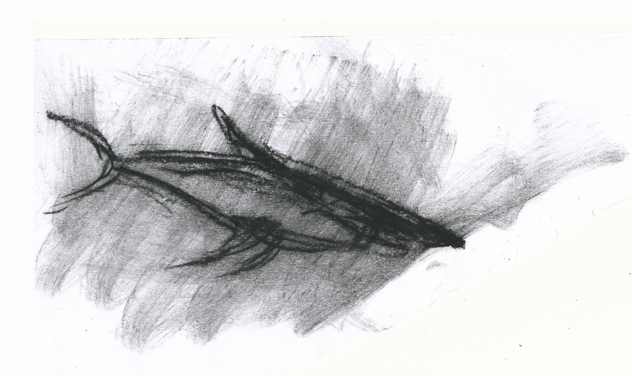 Whale Shark, 2011
