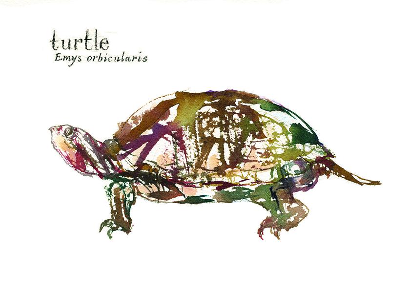 Turtle, 2016