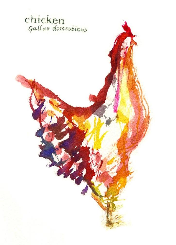 Chicken, 2016