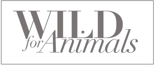 Wild Animals Header v2 copy.jpg