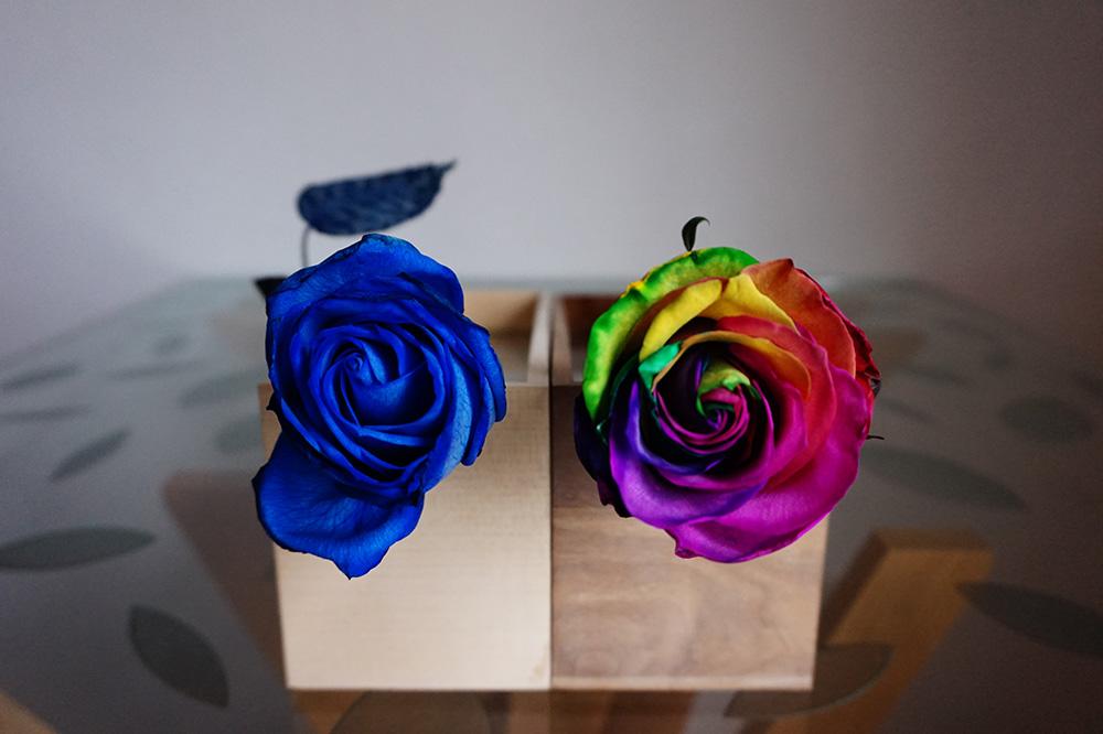 gift rose 01