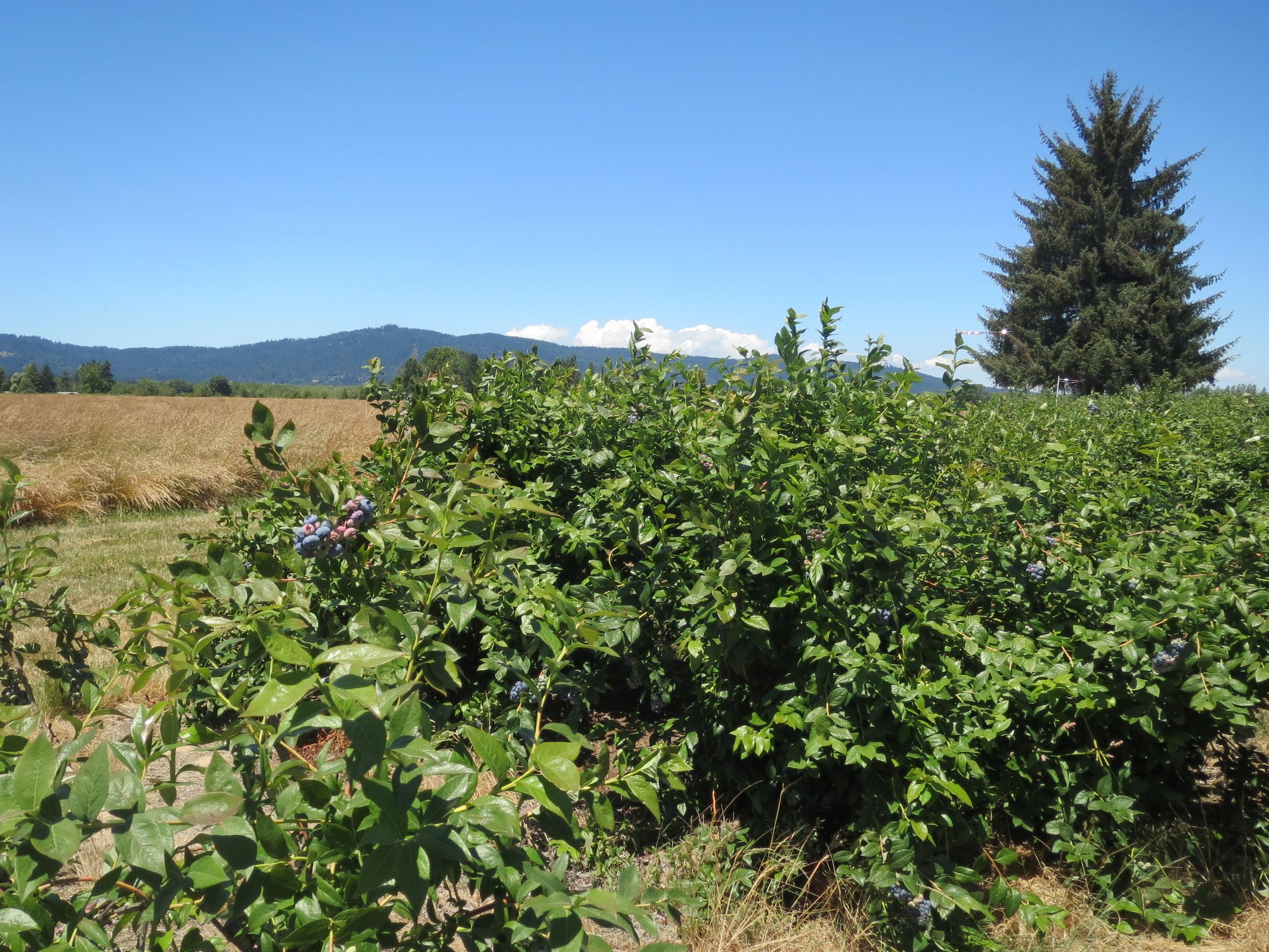 Sonoma County, BBM 118.JPG